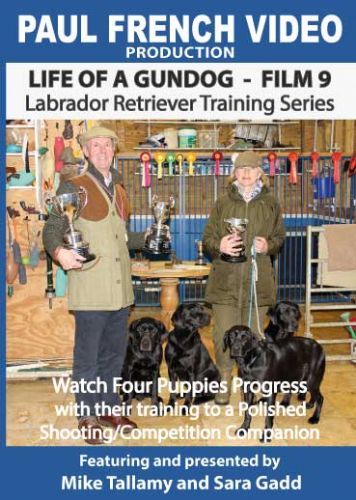 Life of a Gundog - Film 9 - Labrador Retriever Training Series